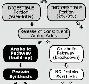 Proceso de asimilación de las proteínas